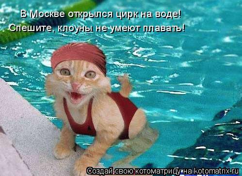 Котоматрица: В Москве открылся цирк на воде!  Спешите, клоуны не умеют плавать!