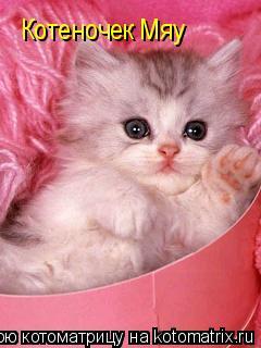 Котоматрица: Котеночек Мяу