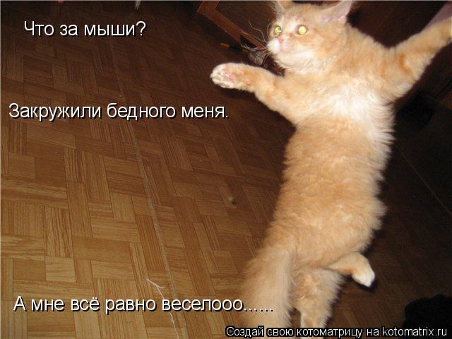 Котоматрица: Что за мыши? Закружили бедного меня. А мне всё равно веселооо......
