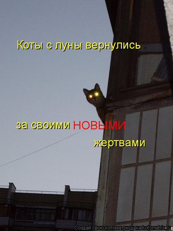 Котоматрица: Коты с луны вернулись за своими НОВЫМИ жертвами