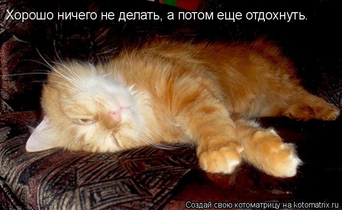 Котоматрица: Хорошо ничего не делать, а потом еще отдохнуть.