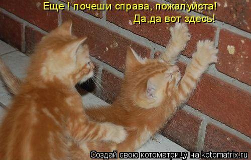 Котоматрица: Да,да вот здесь! Еще ! почеши справа, пожалуйста!
