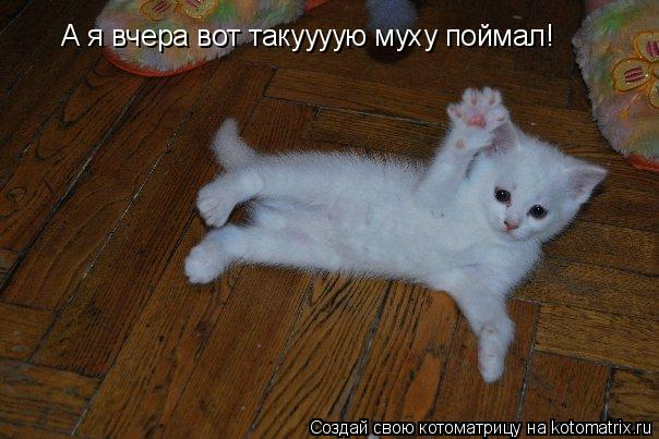 Котоматрица: А я вчера вот такуууую муху поймал!