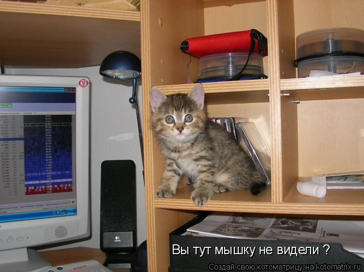 Котоматрица: Вы тут мышку не видели ?