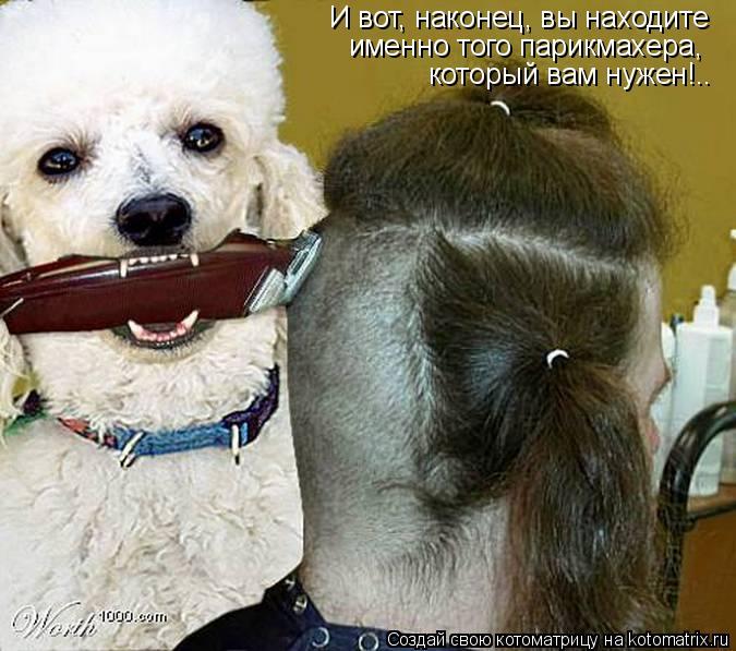 Котоматрица: И вот, наконец, вы находите именно того парикмахера,  который вам нужен!..