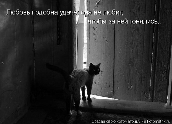 Котоматрица: Любовь подобна удаче: она не любит, чтобы за ней гонялись....