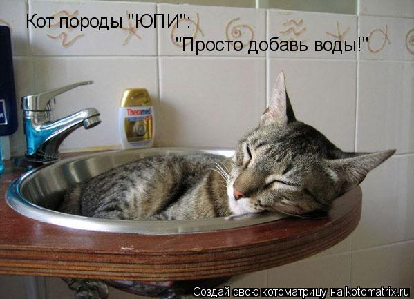 """Котоматрица: Кот породы """"ЮПИ"""": """"Просто добавь воды!"""""""
