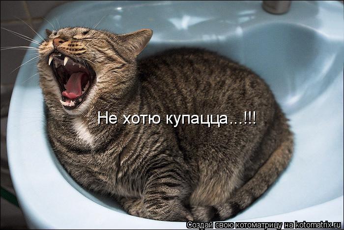 Котоматрица: Не хотю купацца...!!!