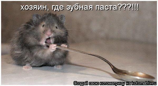 Котоматрица: хозяин, где зубная паста???!!!