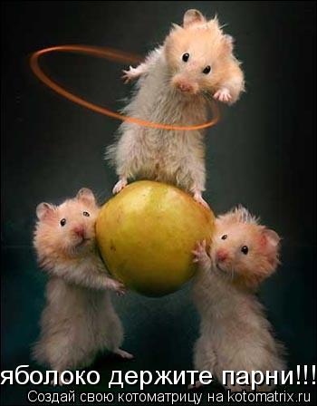 Котоматрица: яболоко держите парни!!!!!!!