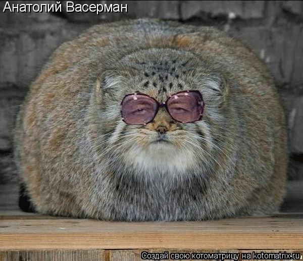 Котоматрица: Анатолий Васерман