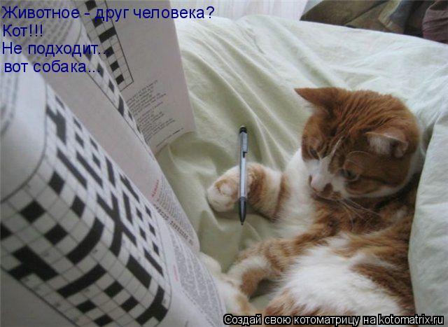 Котоматрица: Животное - друг человека? Кот!!! Не подходит... вот собака...