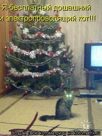 Котоматрица: Я-бесплатный дошашний  и электропроводящий кот!!!