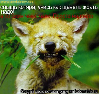 Котоматрица: слышь котяра, учись как щавель жрать надо!  надо! а то блин чавк, чавк. Просто надоело