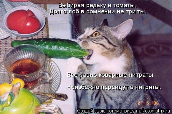 Котоматрица: Выбирая редьку и томаты,  Долго лоб в сомнении не три ты.  Все равно коварные нитраты Неизбежно перейдут в нитриты.