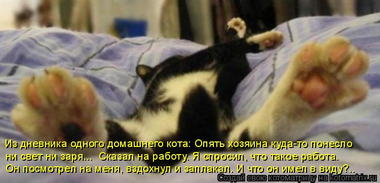 Котоматрица: Из дневника одного домашнего кота: Опять хозяина куда-то понесло  ни свет ни заря...  Сказал на работу. Я спросил, что такое работа.  Он посмотр