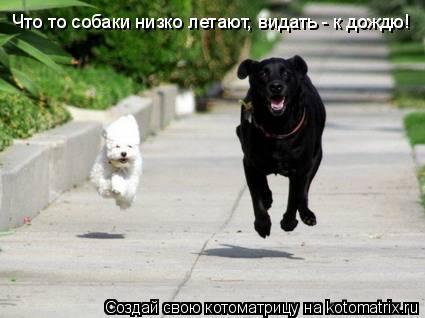 Котоматрица: Что то собаки низко летают, видать - к дождю!