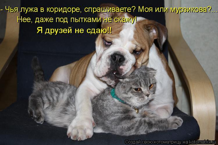 Котоматрица: - Чья лужа в коридоре, спрашиваете? Моя или мурзикова?... Нее, даже под пытками не скажу! Я друзей не сдаю!!