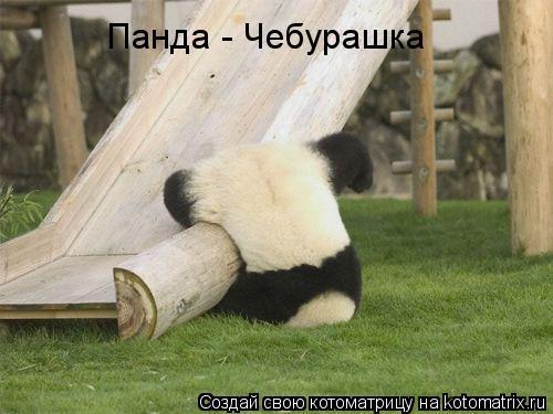 Котоматрица: Панда - Чебурашка