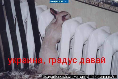 Котоматрица: украина, градус давай