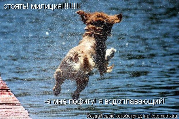 Котоматрица: стоять! милиция!!!!!!!! -а мне пофигу! я водоплавающий!