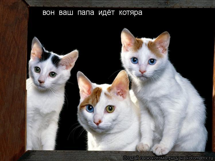 Котоматрица: вон  ваш  папа  идёт  котяра