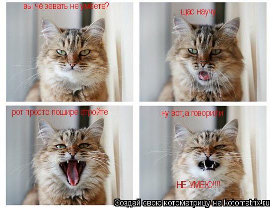Котоматрица: вы чё зевать не умеете? щас научу рот просто пошире отройте ну вот,а говорили НЕ УМЕЮ!!!!
