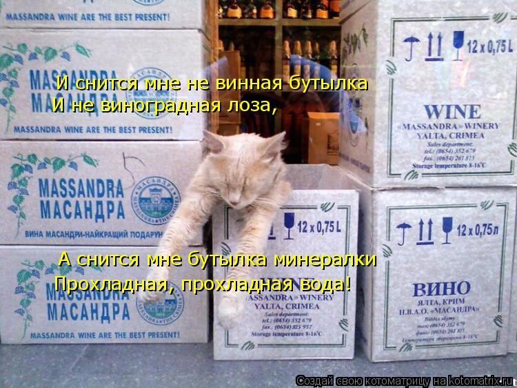 Котоматрица: И снится мне не винная бутылка И не виноградная лоза, А снится мне бутылка минералки Прохладная, прохладная вода!