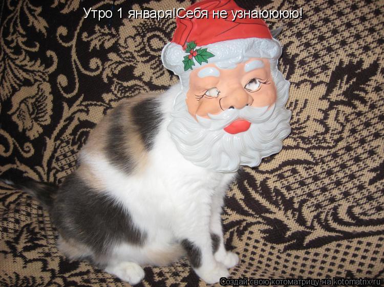 Котоматрица: Утро 1 января!Себя не узнаюююю!