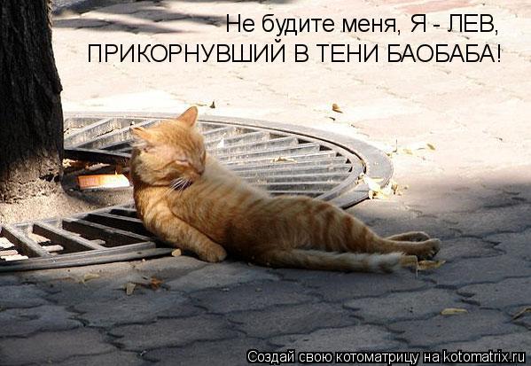 Котоматрица: Не будите меня, Я - ЛЕВ, ПРИКОРНУВШИЙ В ТЕНИ БАОБАБА!