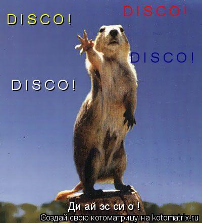 Котоматрица: D I S C O ! D I S C O ! D I S C O ! D I S C O ! Ди ай эс си о !