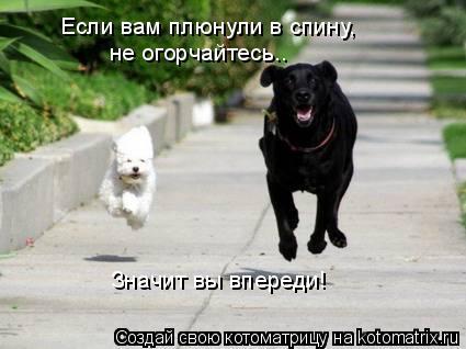 Котоматрица: Если вам плюнули в спину,  не огорчайтесь….   Значит вы впереди!