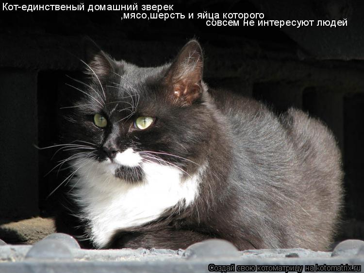 Котоматрица: Кот-единственый домашний зверек совсем не интересуют людей ,мясо,шерсть и яйца которого