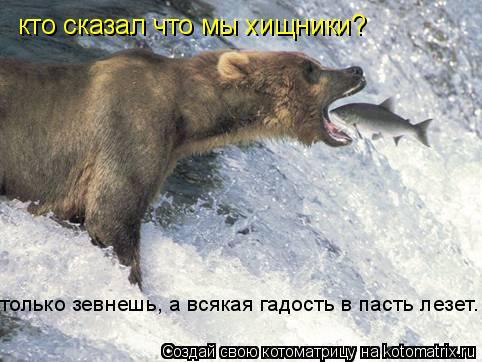 Котоматрица: кто сказал что мы хищники? только зевнешь, а всякая гадость в пасть лезет.