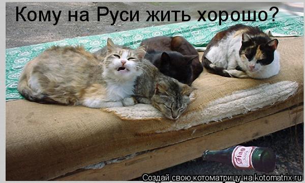 Котоматрица: Кому на Руси жить хорошо?