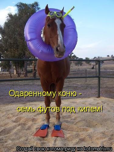 Котоматрица: Одаренному коню - семь футов под килем!