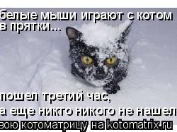 Котоматрица: в прятки... а еще никто никого не нашел... пошел третий час, белые мыши играют с котом