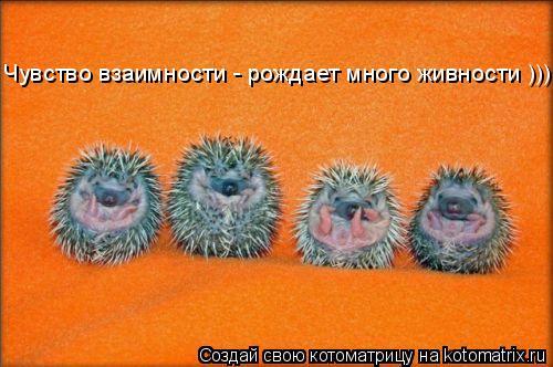 Котоматрица: Чувство взаимности - рождает много живности )))