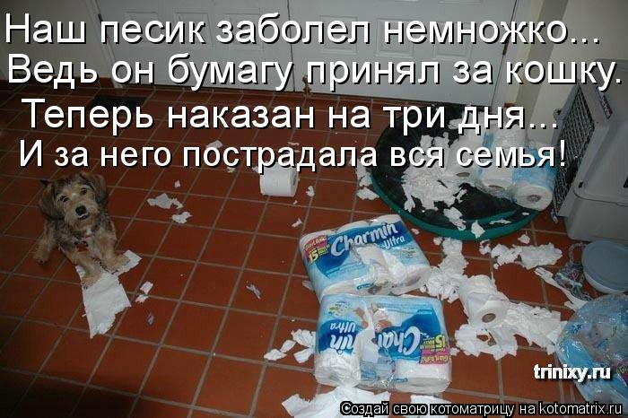 Котоматрица: Наш песик заболел немножко... Ведь он бумагу принял за кошку. Теперь наказан на три дня... И за него пострадала вся семья!