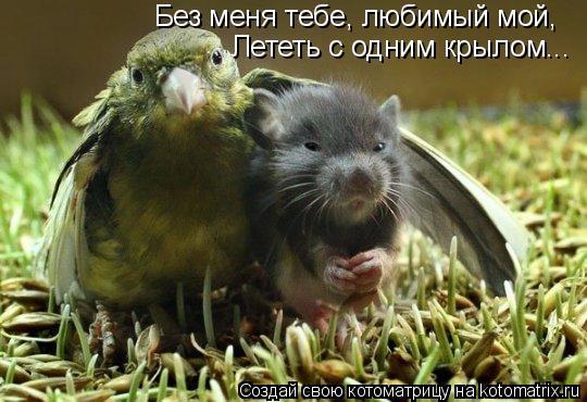 Котоматрица: Без меня тебе, любимый мой, Лететь с одним крылом...