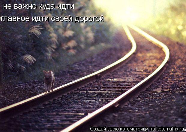 Котоматрица: не важно куда идти главное идти своей дорогой