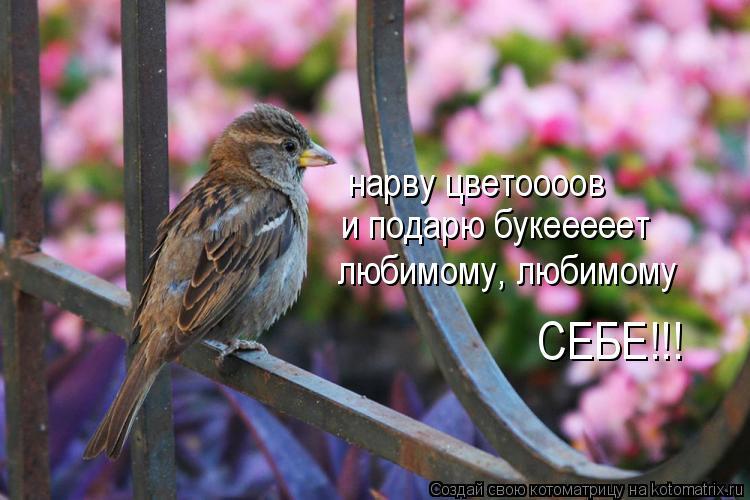 Котоматрица: нарву цветоооов и подарю букееееет любимому, любимому СЕБЕ!!!