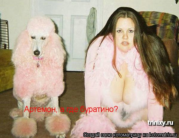 Котоматрица: Артемон, а где буратино?