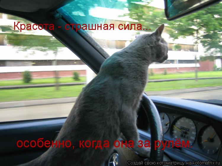 Котоматрица: Красота - страшная сила... особенно, когда она за рулём.