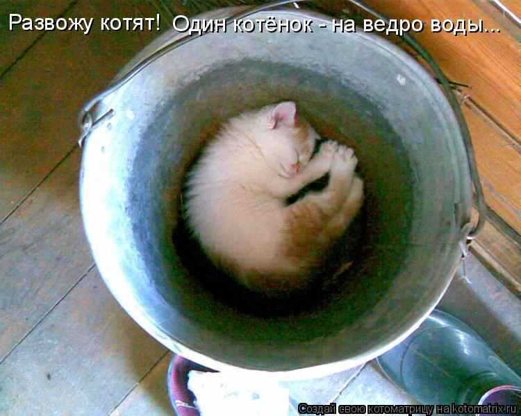 Котоматрица: Развожу котят! Один котёнок - на ведро воды...