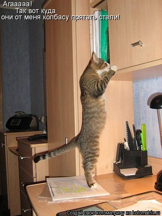 Котоматрица: Агааааа! Так вот куда  они от меня колбасу прятать стали!