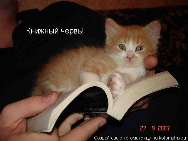 Котоматрица: Книжный червь!
