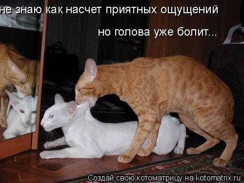 Котоматрица: не знаю как насчет приятных ощущений но голова уже болит...