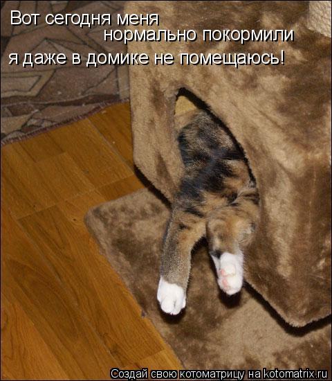 Котоматрица: Вот сегодня меня  нормально покормили я даже в домике не помещаюсь!