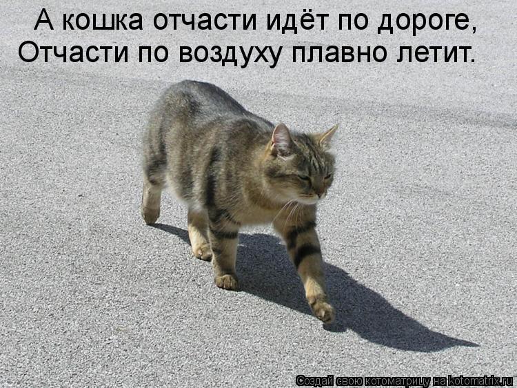 Котоматрица: А кошка отчасти идёт по дороге, Отчасти по воздуху плавно летит.
